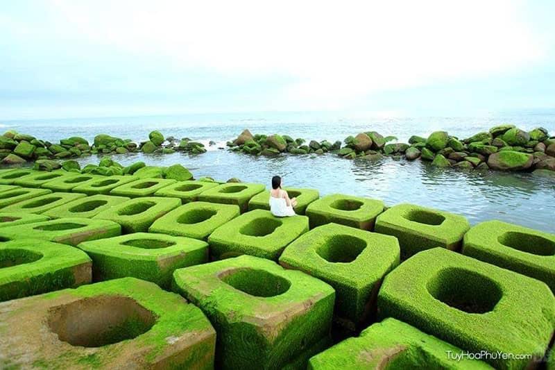 Phát 'sốt' với cảnh rêu phủ xanh ở bờ biển Tuy Hòa Phú Yên