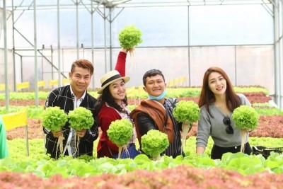 Một ngày trải nghiệm làm nông dân tại vườn rau thủy canh!