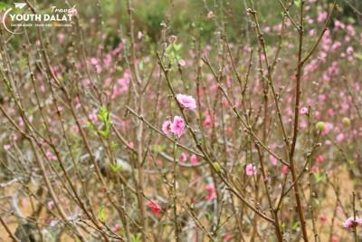 Thung lũng đào hoa Mười Lời