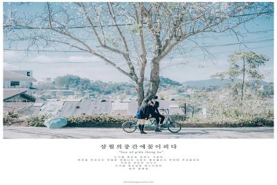 Ngỡ ngàng khung cảnh Đà Lạt mùa hoa BAN đẹp tựa xứ Hàn