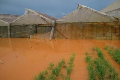 Mưa lớn nhấn chìm nhiều khu nhà vườn tại Đà Lạt