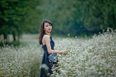 Ngẩn ngơ trước vẻ đẹp của cánh đồng hoa tam giác mạch Đà Lạt