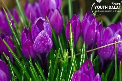 """10 loại hoa """"đẹp nhưng độc"""" của Đà Lạt"""