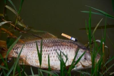 Hồ Xuân Hương nồng nặc múi tanh do cá chết nổi trên hồ