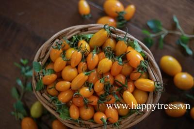 Lợi nhuận cao từ cà chua được trồng từ trứng gà và sữa