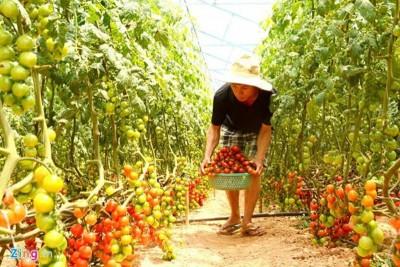 Đà Lạt: Hai anh em 9x kiếm tiền tỷ nhờ nông trại rau sạch