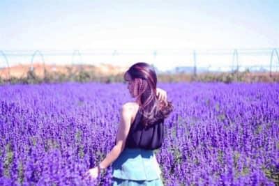 Cánh đồng Lavender siêu lãng mạn vừa xuất hiện tại Đà Lạt