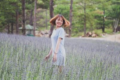Cánh đồng Lavender Đà Lạt nở rộ khiến giới trẻ phát mê