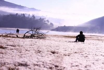 'Cánh đồng tuyết' Đà Lạt - giấc mơ có thật