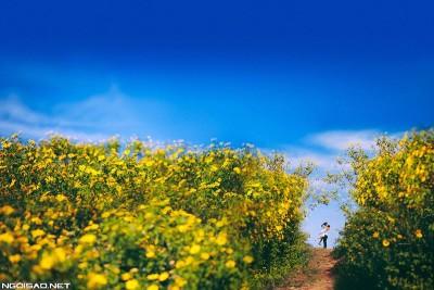 Mùa thu tháng 10 - Mùa săn hoa rực rỡ cho tín đồ mê phượt!