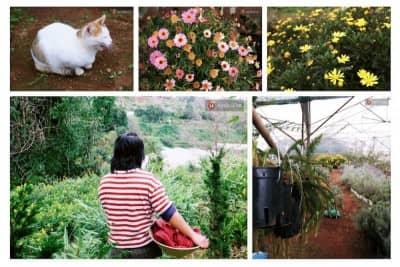 Cô thạc sĩ Sài Gòn bỏ phố lên rừng trồng hoa