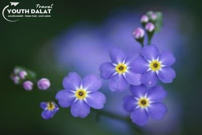 Lưu Ly - Loài hoa mang tên anh