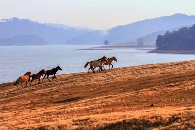 Vó ngựa trên thảo nguyên Đà Lạt