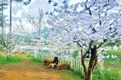 5 khu vườn mộng mơ cực đẹp ở Đà Lạt