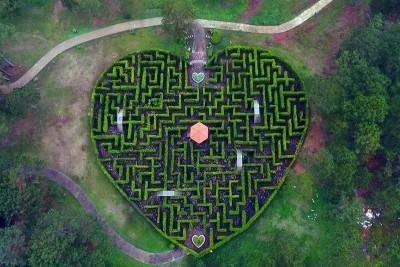 Dắt gấu đi giải mã mê cung tại ' khu vườn địa đàng' ở Đà Lạt