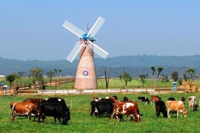 Khánh thành trang trại bò sữa đạt chuẩn châu Âu đầu tiên