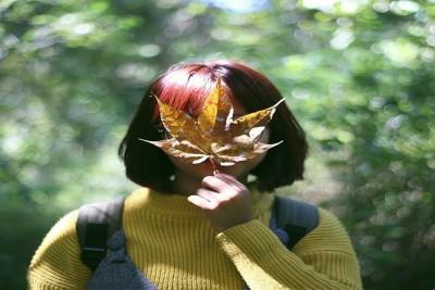 Truy tim rừng lá phong tuyệt đẹp ở Lâm Đồng