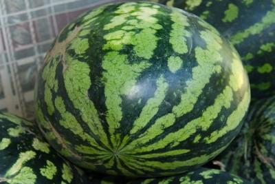 Lâm Đồng - Heo ăn dưa hấu rồi lăn ra chết