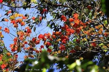 Tour khám phá rừng lá phong tại Langbiang