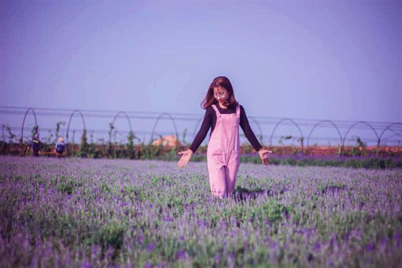 canh-dong-lavender-da-lat